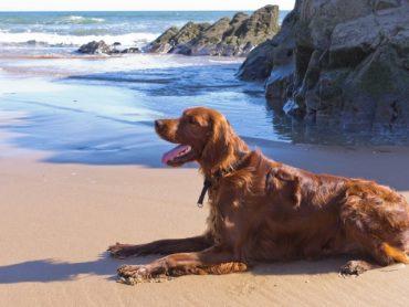 Destinia, Viajes Eroski y Gran Canaria apoyan el primer sello turístico Pet Friendly de España